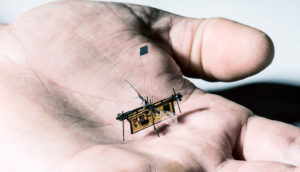 robo fly in palm