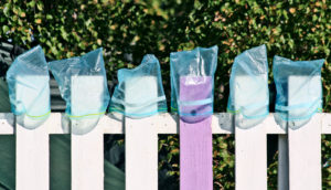 ziplock bags on a fence (drug delivery concept)