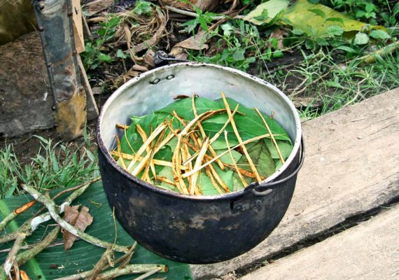 Ayahuasca preparation (psychedelic drugs concept)