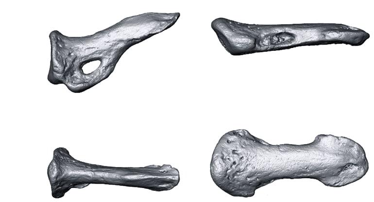 claws 3D models