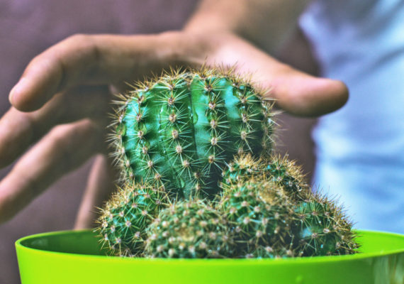 hand about to grab cactus - e-dermis