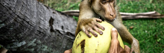 person and monkey put hands on melon - grooming claws