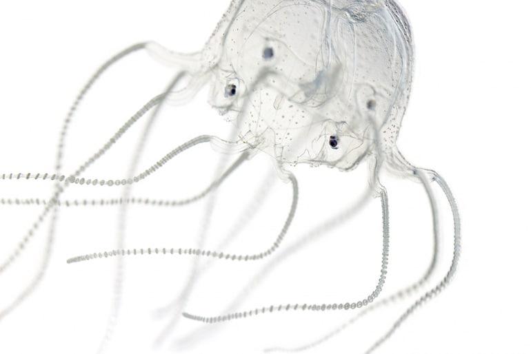 jellyfish eyes on white