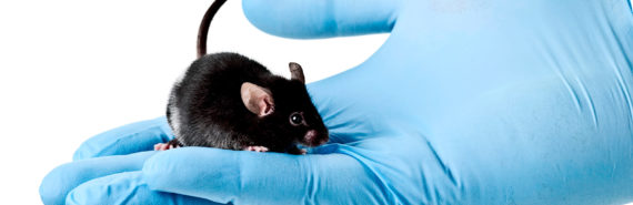 mouse in blue-gloved hand