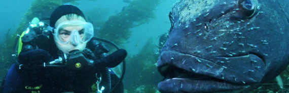 diver and giant sea bass