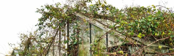 overgrown greenhouse - hothouse Earth