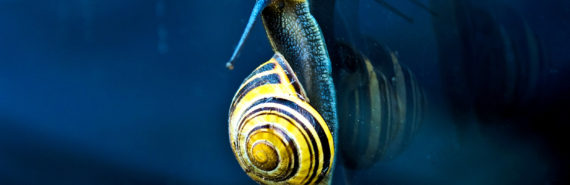 snail on the glass (chirality concept)