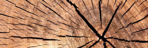Tree rings with cracks from center (Thera volcano concept)