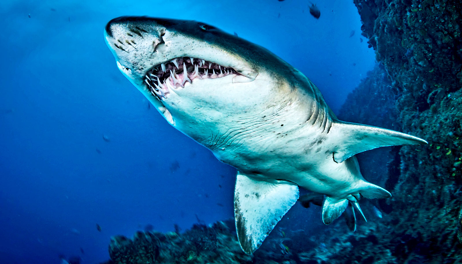 How many teeth does a shark have Counting is not amenable
