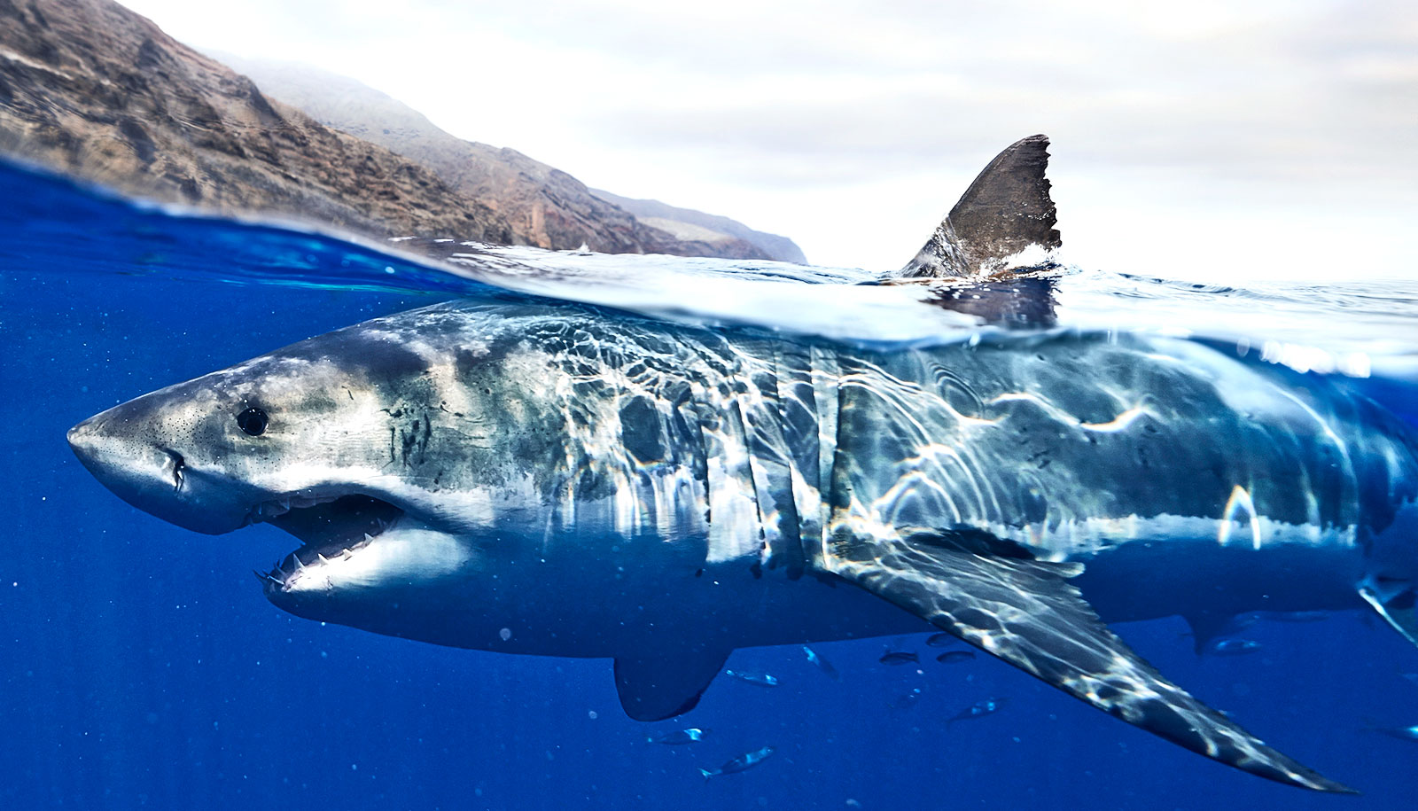 Environmental DNA sniffs out sharks - Futurity