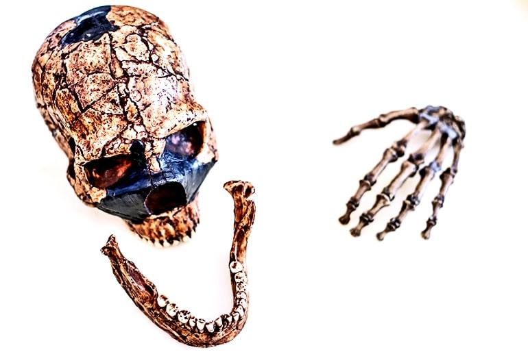 assorted Neanderthal bones