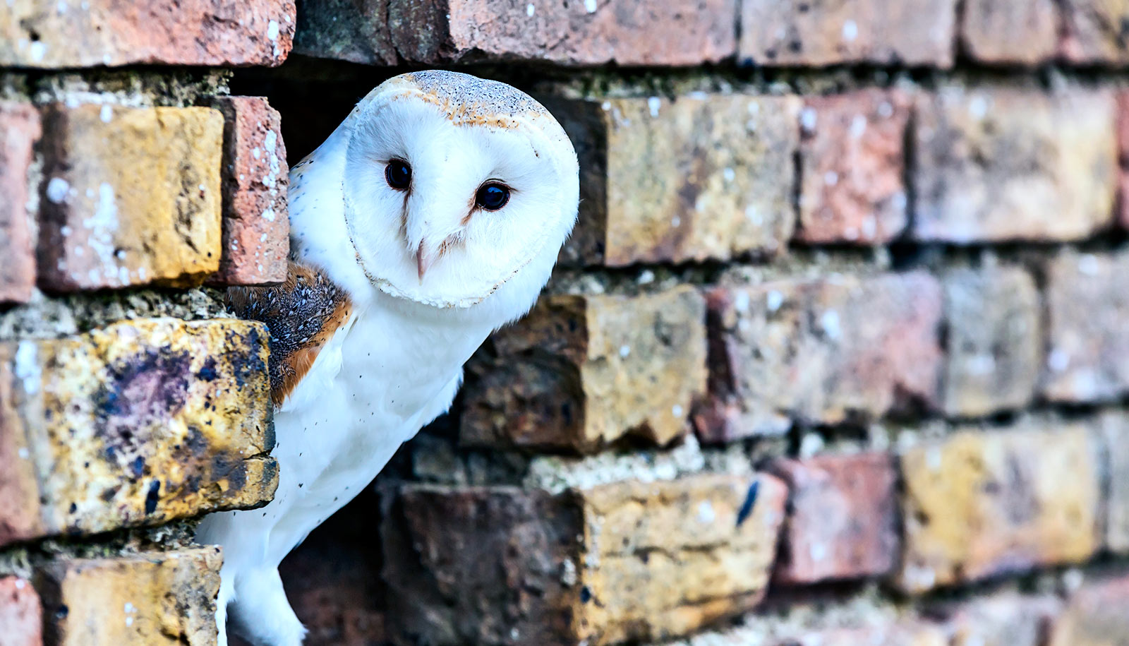 Owls shed light on how we focus on what's important