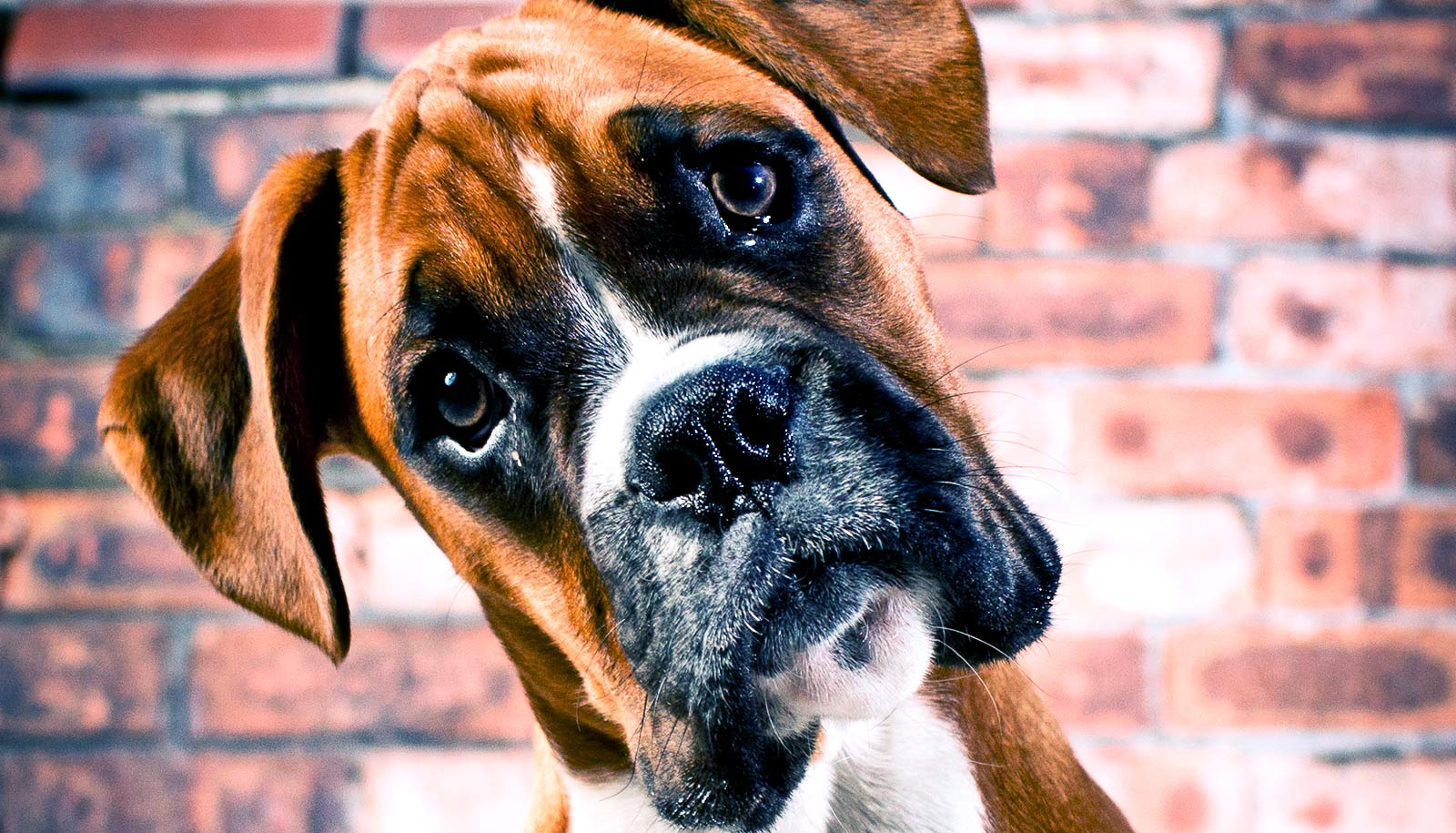 Do dogs understand the words we say to them?