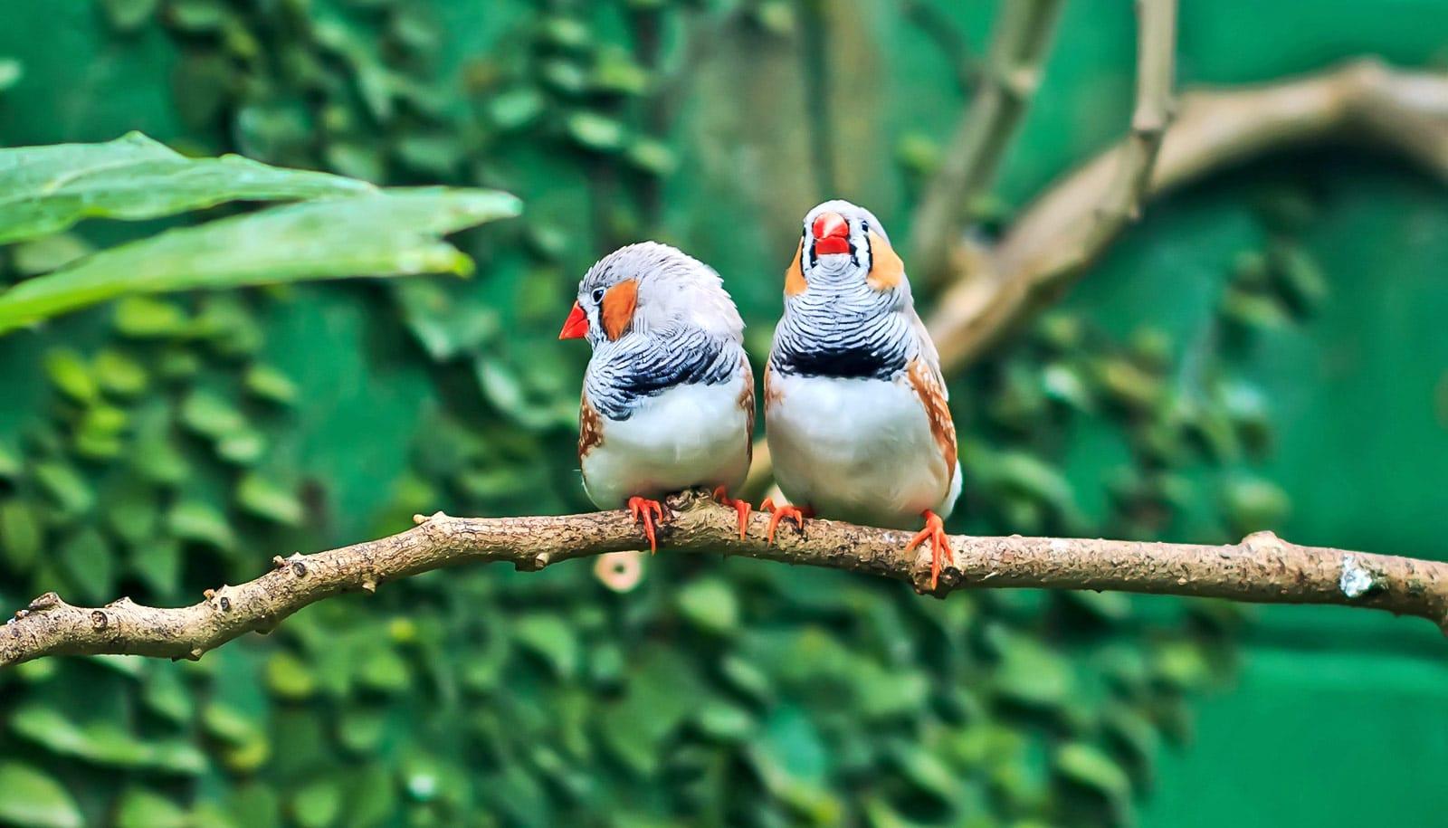 Bird brains light up near the right 'voice coach'