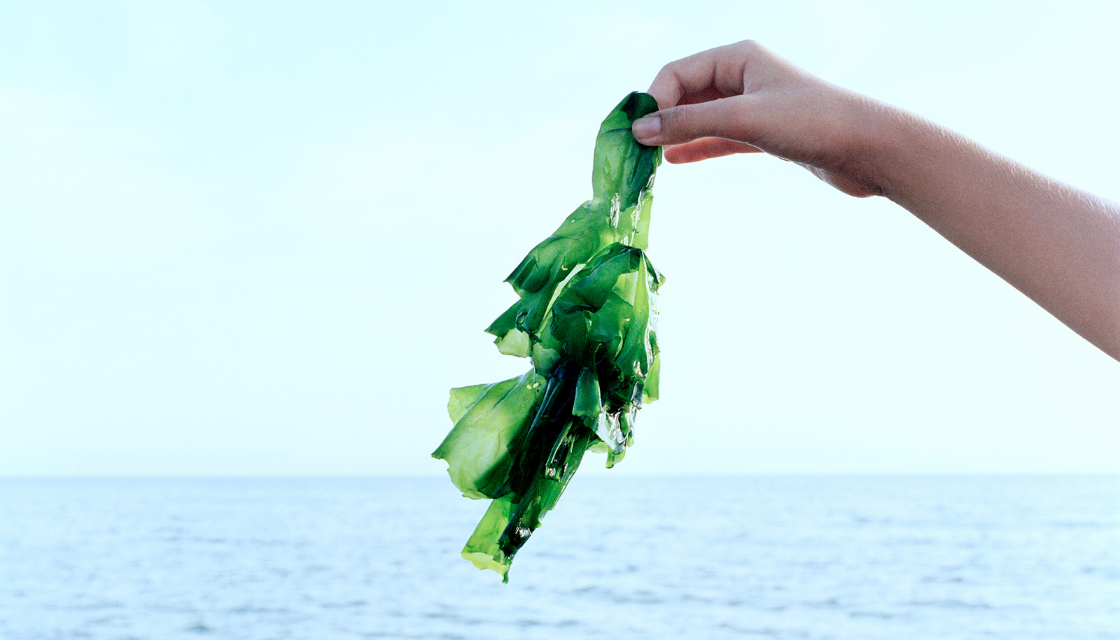 Graphene strengthens seaweed-based smart material