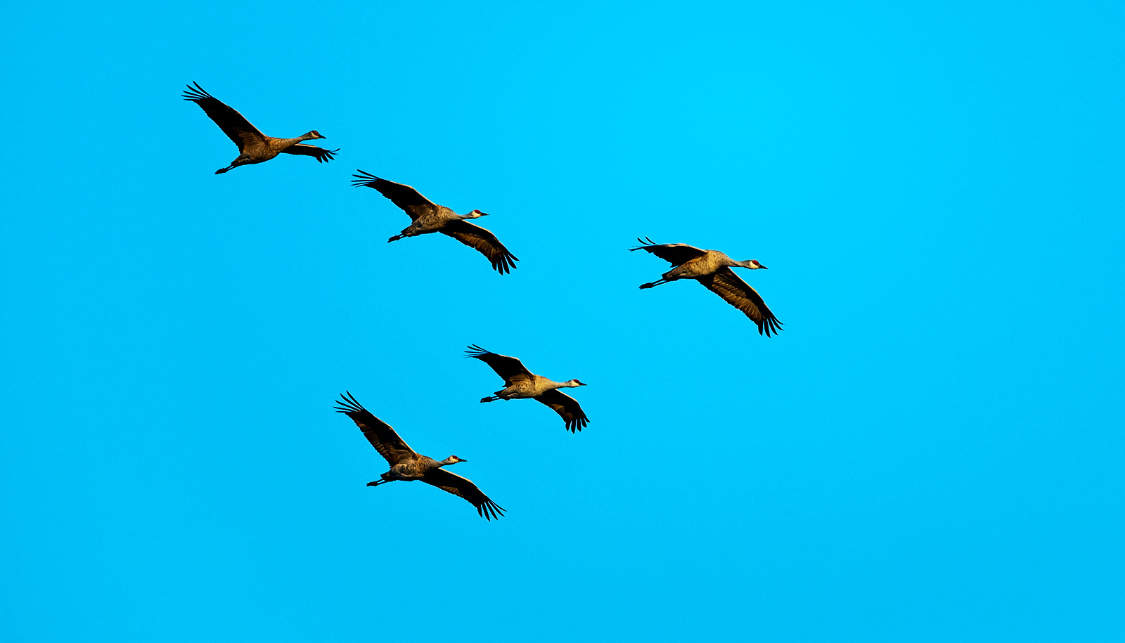 Why don't birds fly into each other? - Futurity