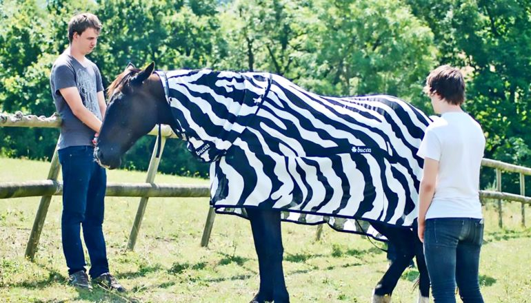 horse with zebra coat