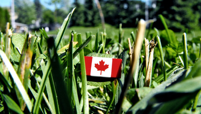 tiny canadian flag in grass