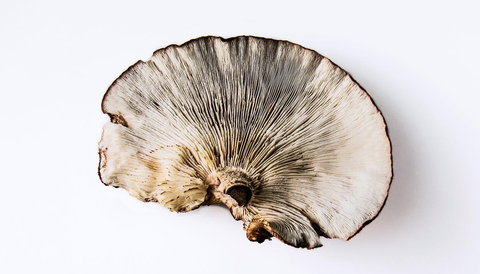 Eat mushrooms to keep your brain sharp? - Futurity