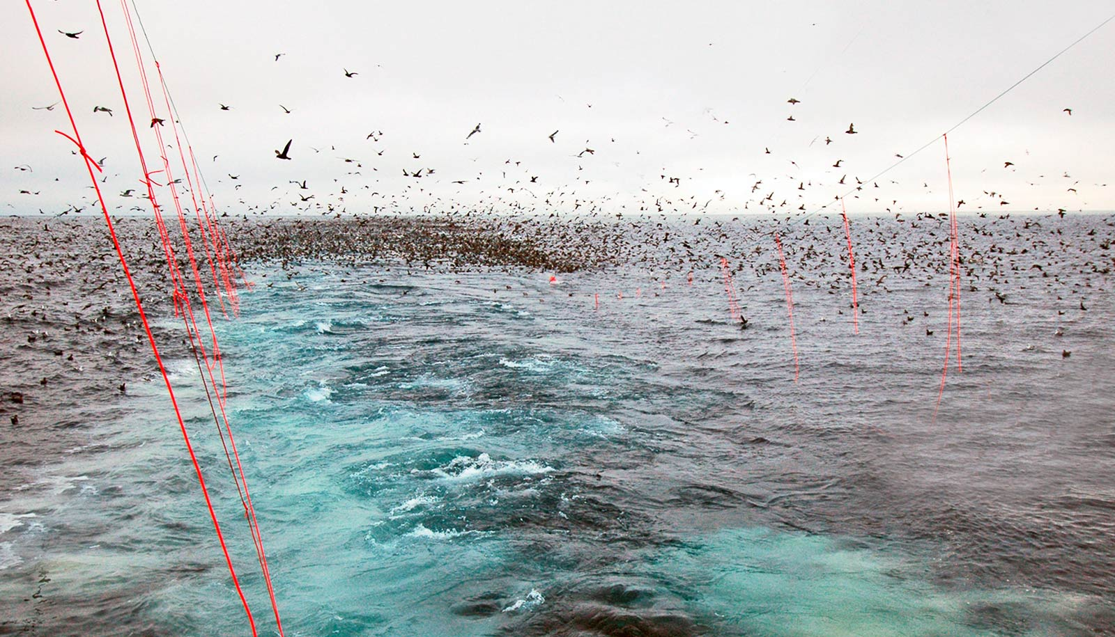 streamerlines behind boat, lots of seabirds