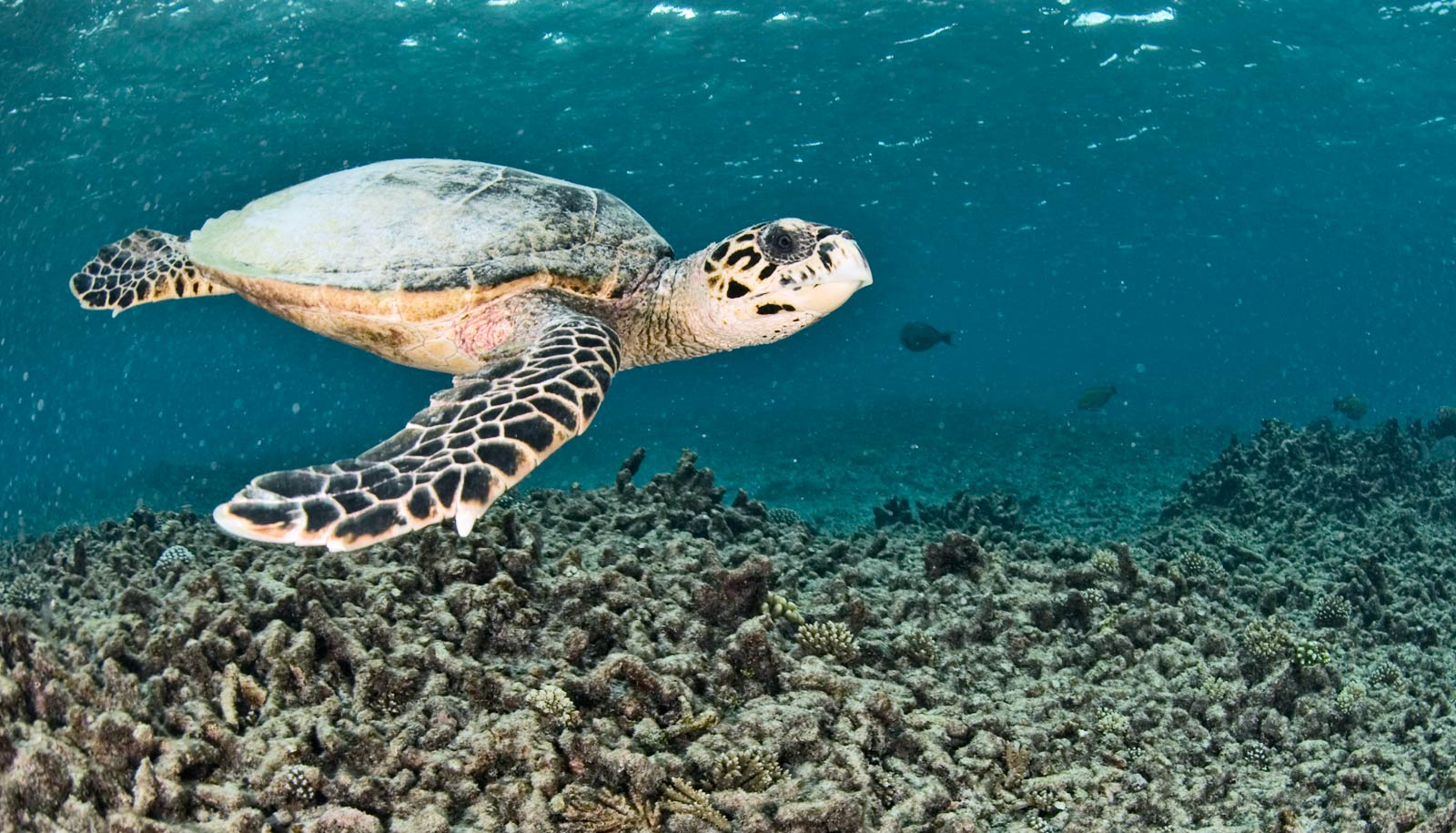 Not all coral reefs mind warm water