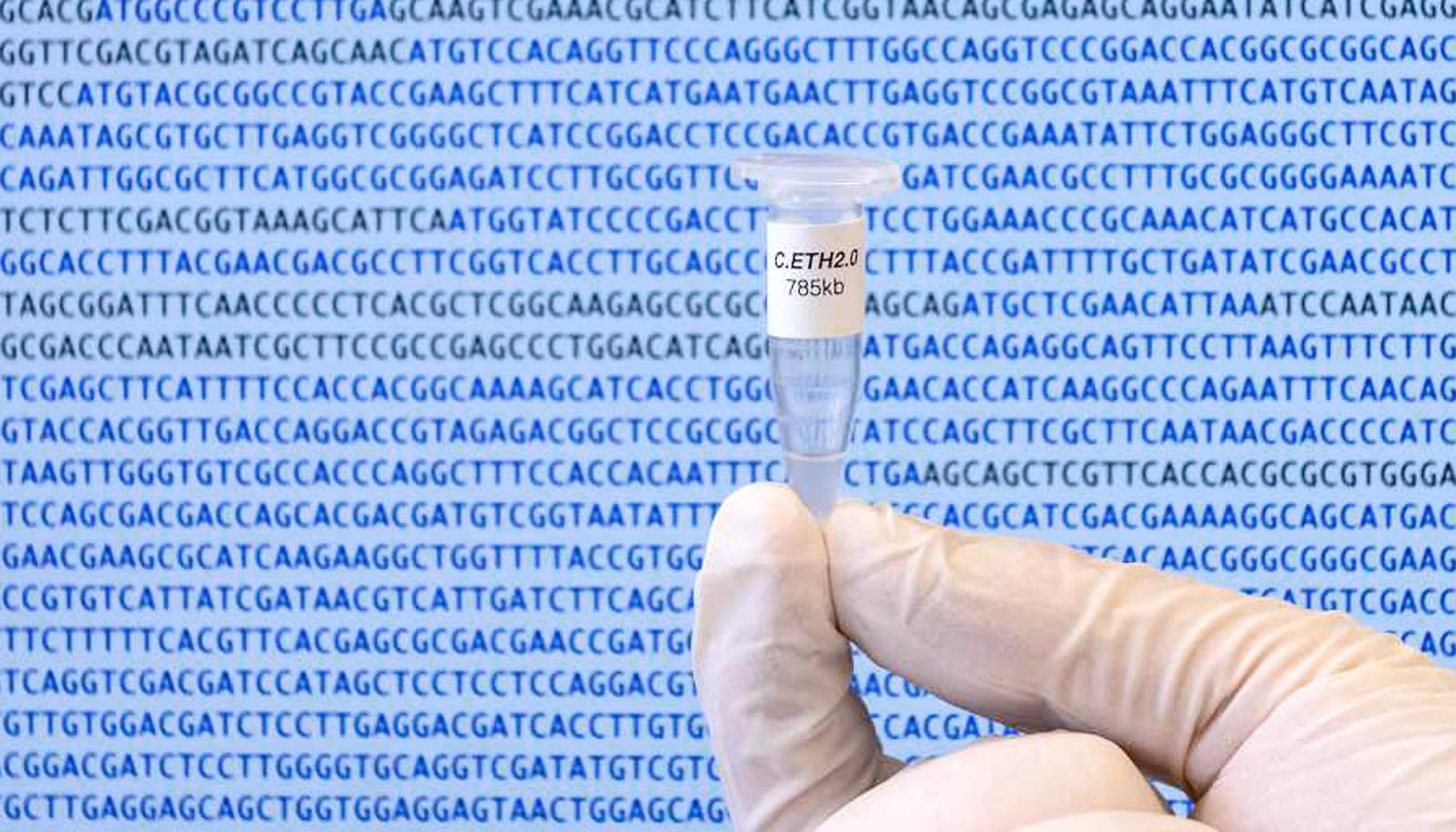 This is the first computer-generated genome