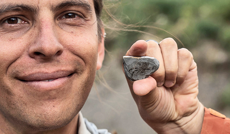 callichimaera perplexa fossil