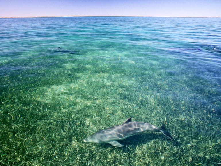dolphin and the horizon