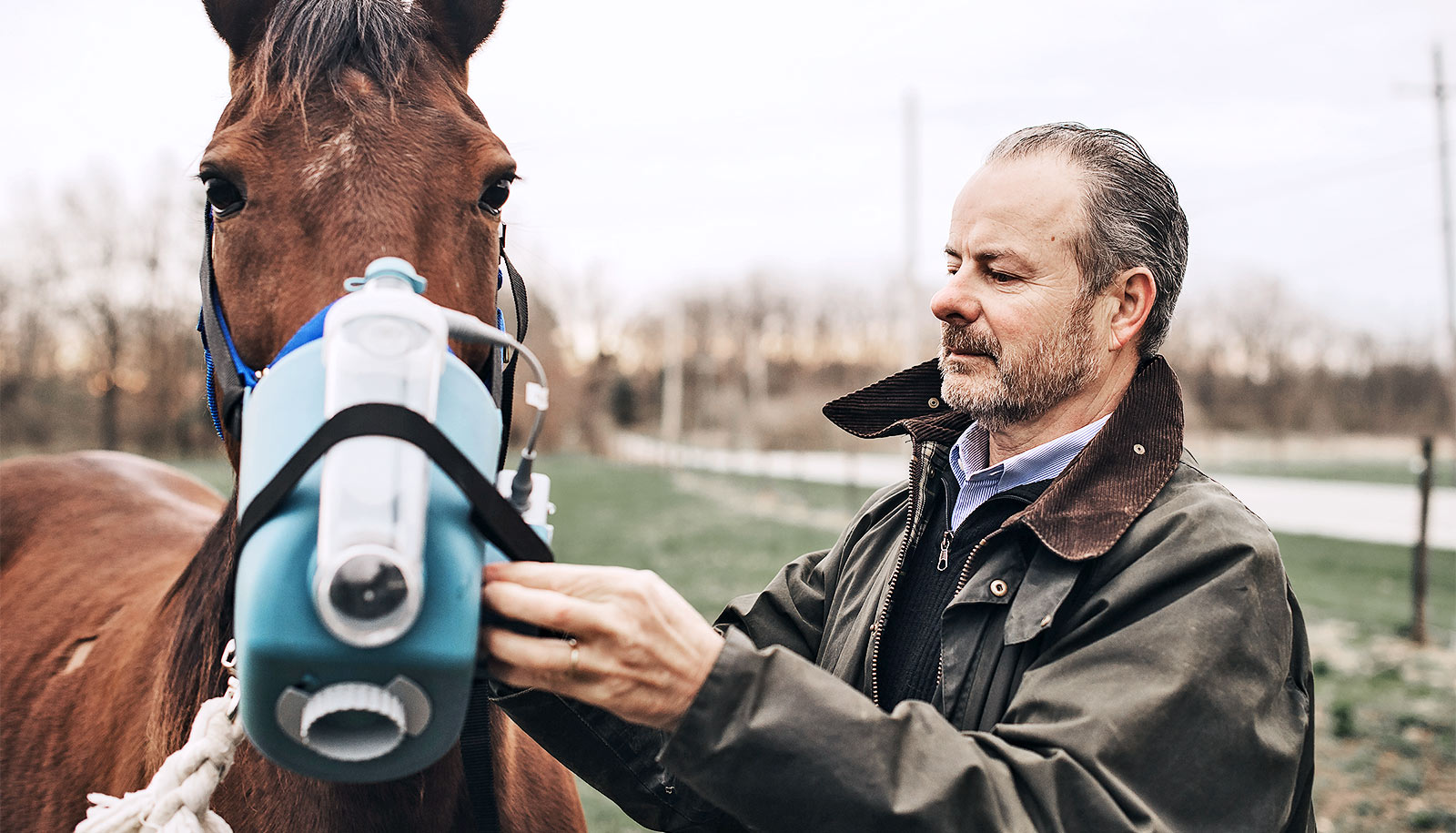 Asthma can keep horses from winning races
