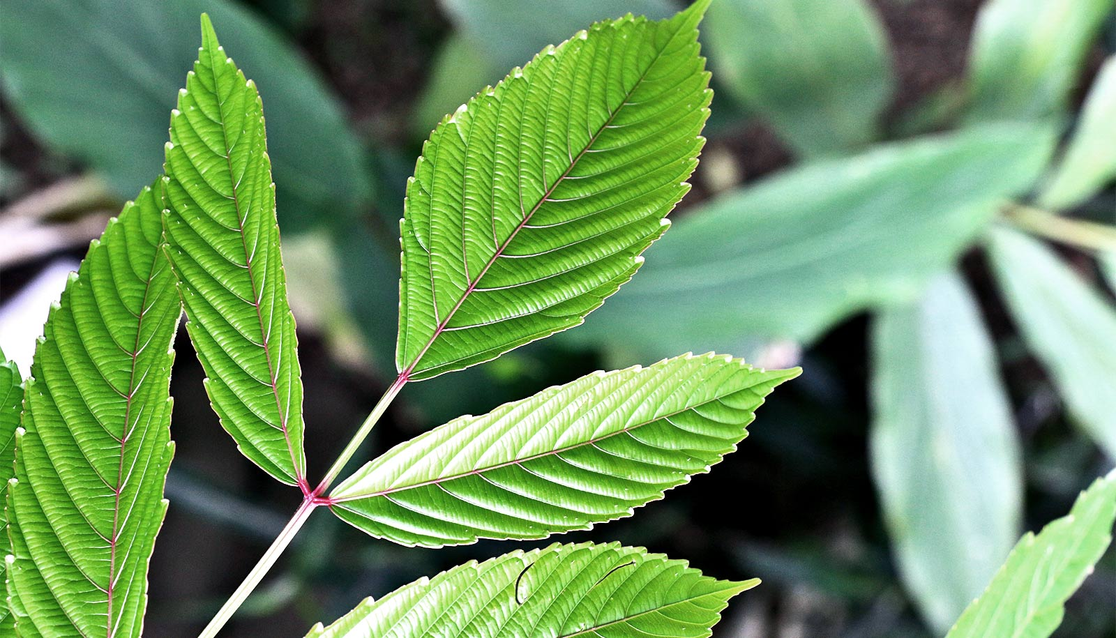 These medicinal plants put brakes on cancer growth
