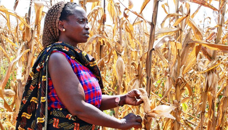 farmer in tanzania (conservation agriculture concept)