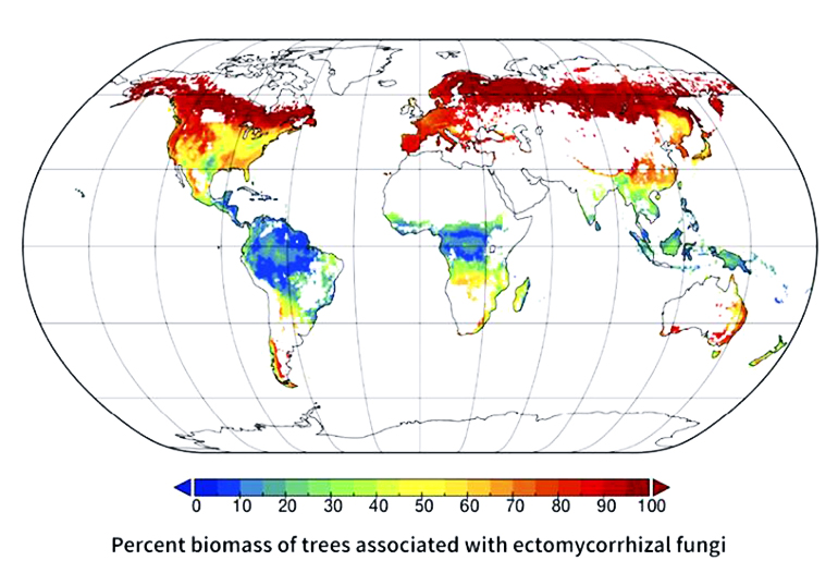 maps show the distribution of trees likely to associate with the three major types of symbiotic bacteria or fungi.
