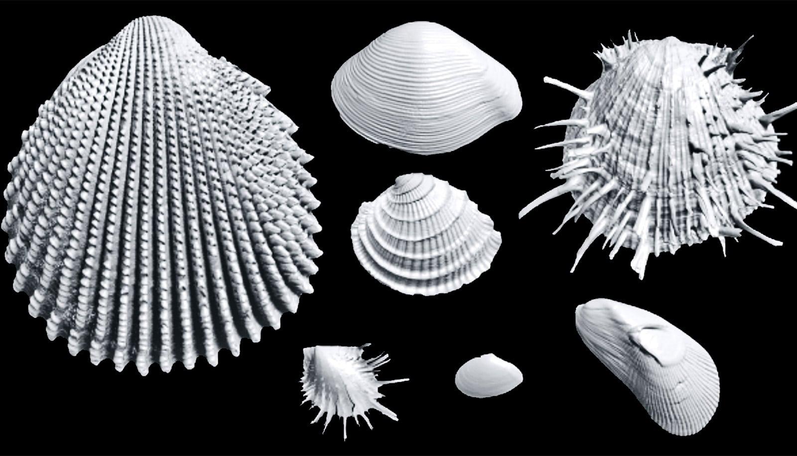 3D imaging reveals hidden history in old shells