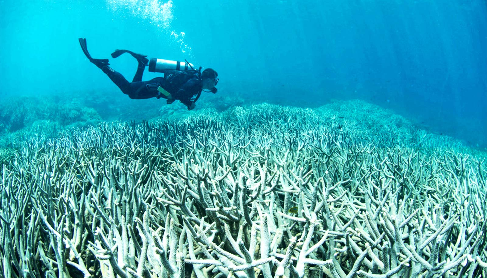 With smart action, hope isn't lost for coral reefs