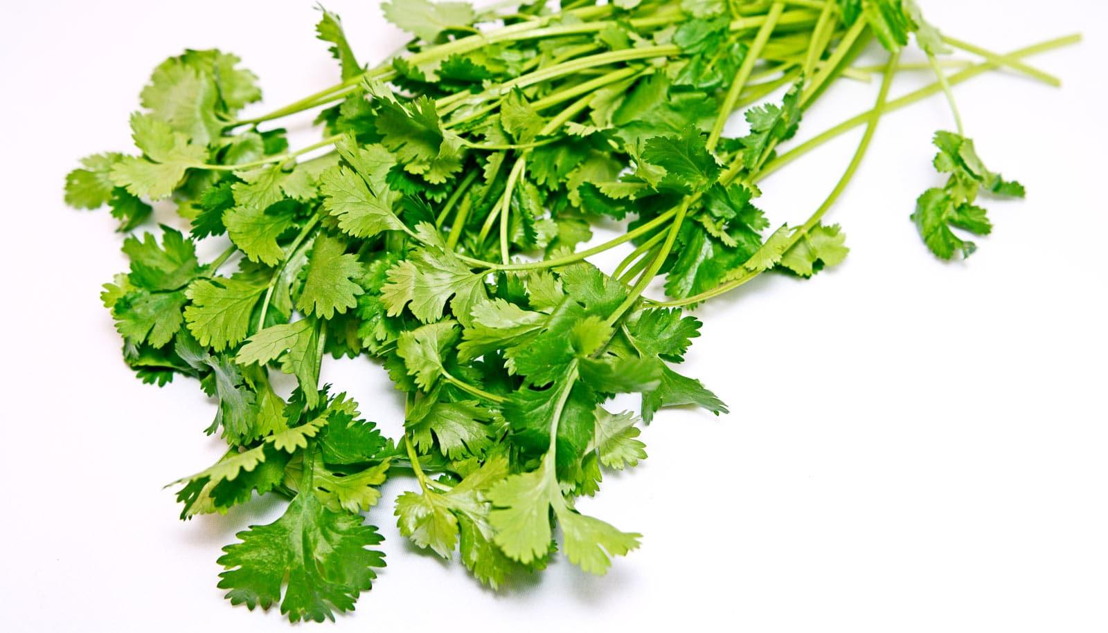 Scientists now know how cilantro works against seizures