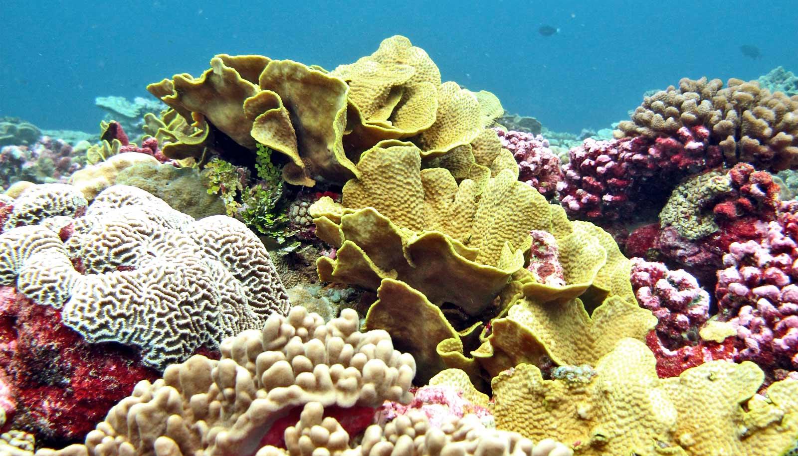 'Refugee corals' move to escape warming seas