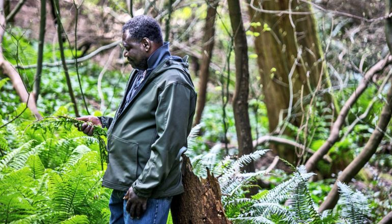 A man examines a fern and other plants within Washington Park Arboretum (city planners concept)