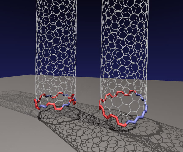 two nanotubes with different edges on the bottom