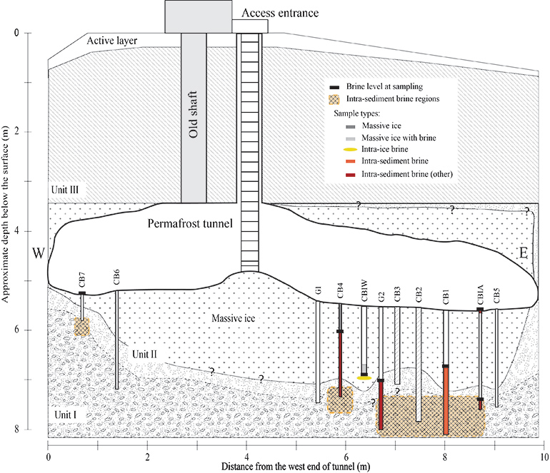 A schematic of the study site
