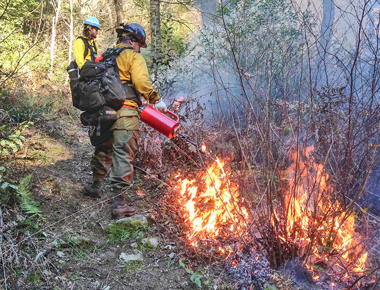two firefighters, one in foreground uses red canister device to set fire to a shrub
