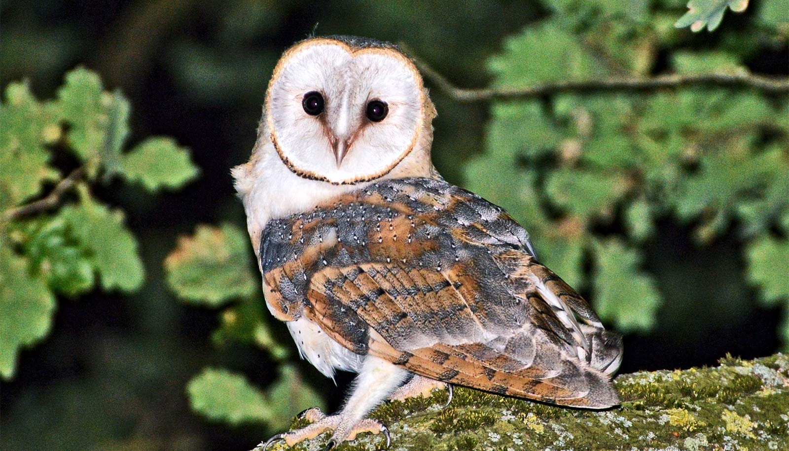 Device pinpoints sound like a barn owl's brain