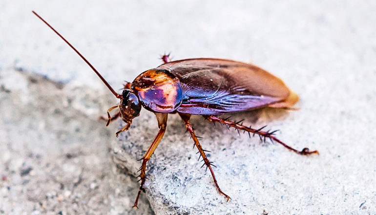 A cockroach perches on a break in some concrete as light reflects off its shell.