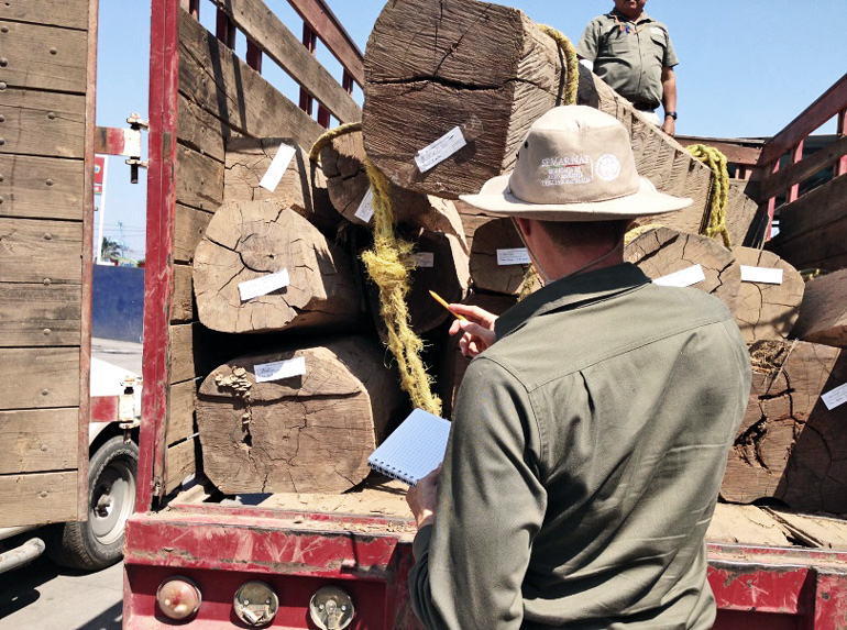 The image shows officials busting an illegal shipment of timber in Mexico, with an official pointing to a truckload of trees.