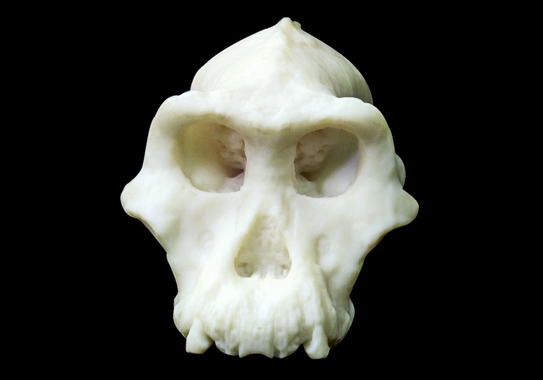 A white, plastic-looking 3D-printed version of the skull fills out some of the missing pieces from the original, such as the cheekbones and teeth, sits on a black background