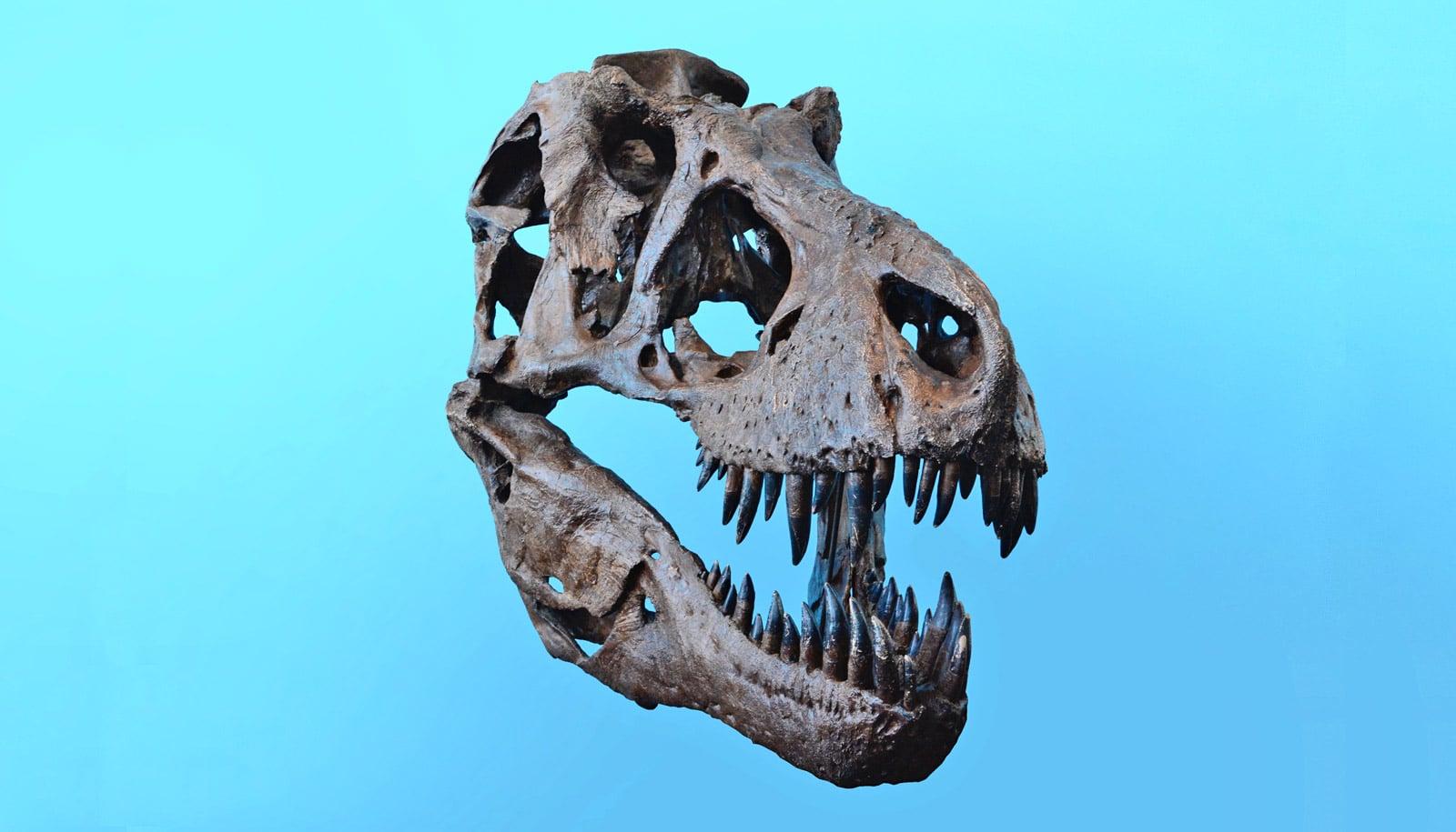 How T. rex's 6-ton bite didn't break its own skull