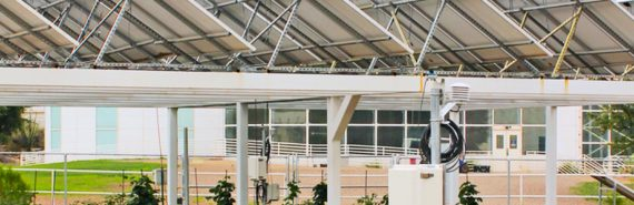 Some green crops sit in the shade of a row of white solar panels