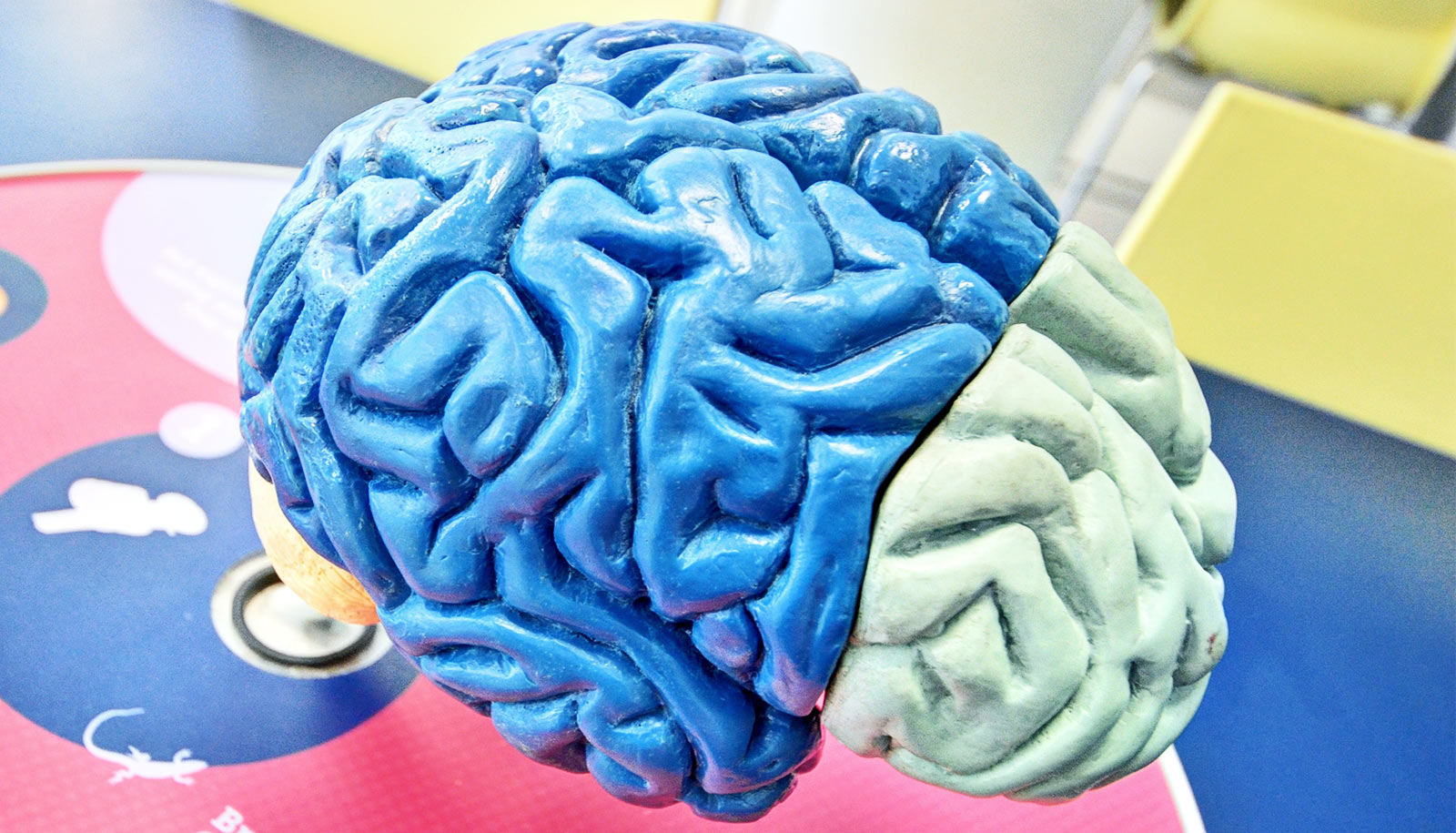 1 method may prevent brain cell death in several diseases