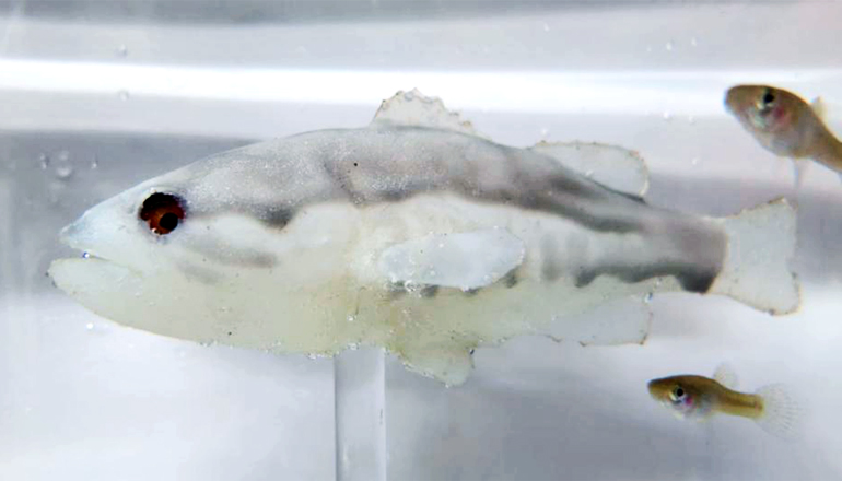A pale white robot fish moves through the water as smaller fish swim around it