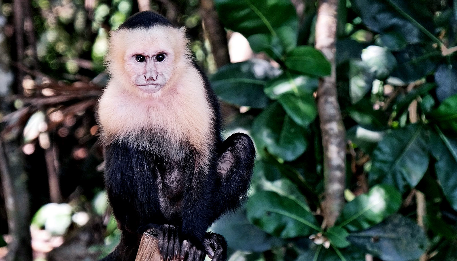 Monkeys are more willing than we are to 'take the shortcut'