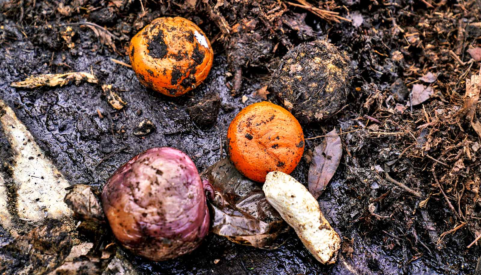 decomposing oranges and onion